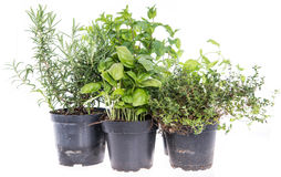 Herb Garden isolated on white Stock Image