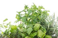 Herb Garden isolated on white Stock Photos