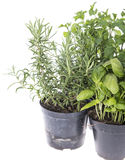 Herb Garden isolated on white Stock Photography