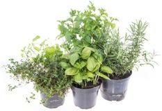 Herb Garden isolou-se no branco imagem de stock royalty free