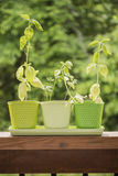 Herb Garden - Yard Royalty Free Stock Photography