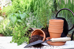 Herb Gardening and Trowel Royalty Free Stock Photos