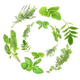 Herb Garlands Stock Photos