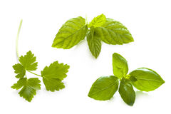 Herb garnish isolated Stock Photos