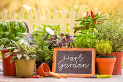 Herb garten. Herb garden at home yard in with pots of herbs in front of fence Stock Photography