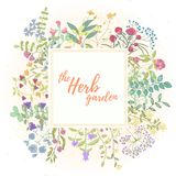Herb hand drawn card Royalty Free Stock Photos