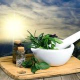 Herb. Al mortar green summer thyme melissa royalty free stock photo