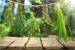 Herb. Oregano basil rope string white food stock image