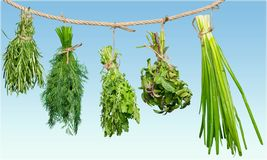 Herb. Oregano basil rope string white food stock photography