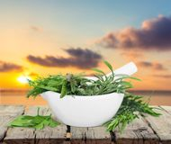 Herb. Variation collection basil bunch lemon balm royalty free stock image