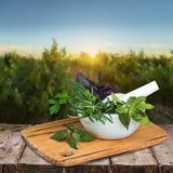 Herb. Al mortar green summer thyme melissa stock photo