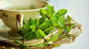Herb, Herbalism, Cup, Tea