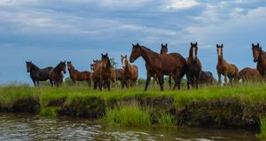 A herb of horses. Near the river stock photo