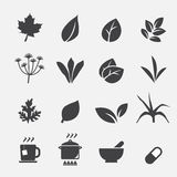 Herb icon Stock Images