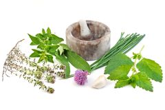 Herb isolated on white background Royalty Free Stock Photo