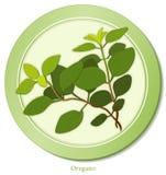herb italian oregano Arkivbild