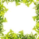 Herb Leaf Abstract Border royalty free stock photos