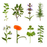 Herb Leaf And Flower Selection Stock Photos
