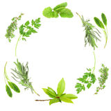 Herb Leaf Beauty Royalty Free Stock Photo