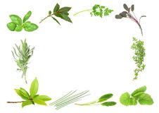 Herb Leaf Border Stock Image