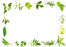 Herb Leaf Border Stock Photo