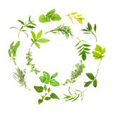 Herb Leaf Circles. Herb leaf selection forming two circles, over white background royalty free stock image