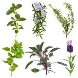 Herb Leaf Collection Royalty Free Stock Images