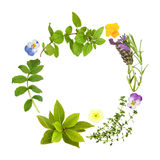 Herb Leaf and Floral Garland. Herb leaf garland of lavender, bay, oregano, lemon thyme and valerian, with primrose and viola flowers, over white background Royalty Free Stock Image