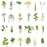 Herb Leaf and Flower Collection. Large medicinal and culinary herb flower and leaf selection isolated over white background Royalty Free Stock Images