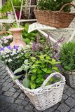 Herb leaf and flowers. Herb leaf selection in a rustic wooden basket including, rosemary, purple and variegated sage, lemon balm, oregano and flower royalty free stock photography