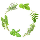 Herb Leaf Garland Royalty Free Stock Photography