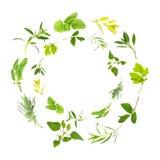 Herb Leaf Garlands. Herb leaf circles of lemon balm, golden marjoram, sage, feverfew, chocolate mint, tarragon, bergamot, lavender, variegated sage, hyssop over stock photography