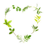 Herb Leaf Heart Royalty Free Stock Photography