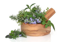 Herb Leaf Mixture Stock Images