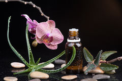 Herb leaf and Orchid with an aromatherapy essential oil Stock Photo