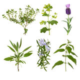 Herb Leaf Selection. Of thyme, lavender, ladys mantle, sage, rosemary and nettle, isolated over white background stock photography