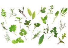 Herb Leaf Selection. Of parsley, lavender, sage, bay, mint, oregano, valerian, thyme, ladies, mantle, spearmint, rosemary, chives, lemon, balm, comfrey, basil stock image