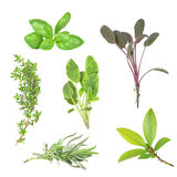 Herb Leaf Selection Royalty Free Stock Photos
