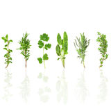 Herb Leaf Selection Royalty Free Stock Photography