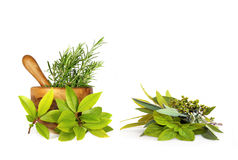 Herb Leaf Selection Royalty Free Stock Images
