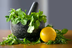 Herb leaf selection in a granite mortar with pestle with lemon Stock Photos
