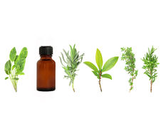 Herb Leaf Sprigs. Herb leaf selection of lavender, bay, thyme, sage, and rosemary with an aromatherapy essential oil brown glass bottle, over white background stock images