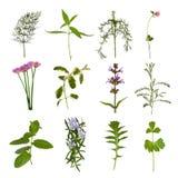 Herb  Leaf Variety Stock Image