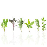 Herb Leaves Royalty Free Stock Photo