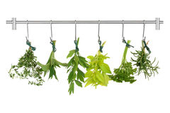 Herb Leaves Drying. Herb leaf sprigs drying on a stainless steel rack, thyme, bergamot, lovage, golden marjoram, parsley and rosemary, isolated over white stock photos