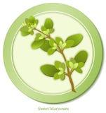 herb marjoram sweet Royaltyfri Fotografi