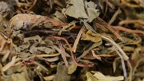Herb medicine Diding or Herba Violae rotating and pause. Top view herb medicine Diding or Herba Violae rotating and pause stock video