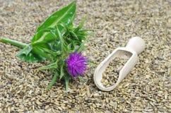 Herb milk thistle silybum marianum stock photography