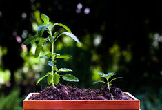Herb mini Garden Royalty Free Stock Photography
