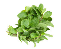 Herb Mint Bundle Royalty Free Stock Image